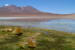 Flamingos on lake in Andes Stock Photo