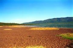 Flamingos, Lake Bogoria, Kenya. Flamingos in Lake Bogoria, Kenya Stock Image