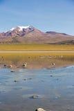 Flamingos on lake Huayñacota with the snowcapped volcano Analla Stock Photos