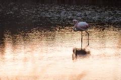 Flamingos in the lake Stock Photos
