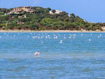 Italian Flamingos Royalty Free Stock Images