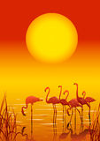 Flamingos in the lake on sunset Royalty Free Stock Photo