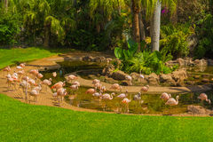 Flamingos in Loro Parque Stockfoto