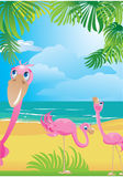 Flamingos na praia tropical bonita Foto de Stock