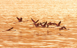 Flamingos nahe Bogoria See, Kenia Lizenzfreie Stockbilder