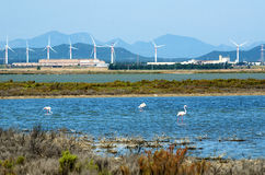 Flamingos next to Cagliari, Sardinia Stock Images