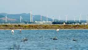 Flamingos next to Cagliari, Sardinia Stock Photo