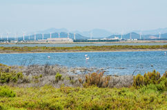 Flamingos next to Cagliari, Sardinia Royalty Free Stock Photography