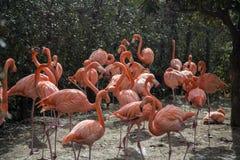 Flamingos no jardim zoológico de Ueno no Tóquio, Japão Imagem de Stock