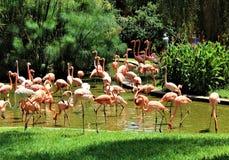 Flamingos no JARDIM ZOOLÓGICO Pretoria, África do Sul fotografia de stock