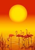 Flamingos no lago no por do sol Foto de Stock Royalty Free