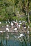 Flamingos in Orlando, Florida Lizenzfreie Stockfotos