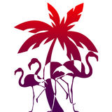 Flamingos and palm tree on a red background Royalty Free Stock Images