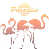 Flamingos and palm tree on a white background Royalty Free Stock Image