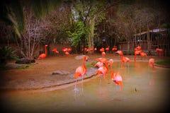 Flamingos am Park Stockbild