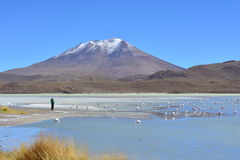 Flamingos and a photographer at a beautiful salt lake in Bolivia Royalty Free Stock Image