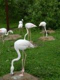 Flamingos. Royalty Free Stock Photos