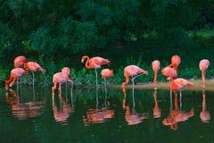 Flamingos pink zoo birds animals Royalty Free Stock Image