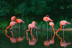 Flamingos pink zoo birds wild life Stock Photos