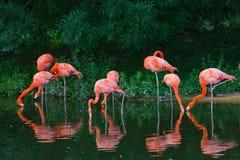 Flamingos pink zoo birds wild life Stock Photos