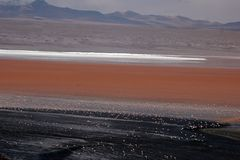 Flamingos on Salar de Uyuni. At Laguna Colorada Stock Photo