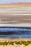 Flamingos, Salzsee und schöne Farben im Los-Flamenco-national Reserve stockbilder