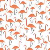 Flamingos seamless pattern Royalty Free Stock Photography
