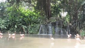 Flamingos, Singapore stock footage