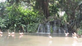 Flamingos, Singapur stock footage