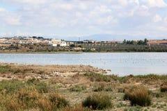 Flamingos in Spanish lake Fuente de Piedra. In the north of Malaga province is the Laguna de Fuente de Piedra, the largest natural lake in the Iberian Peninsula stock photography