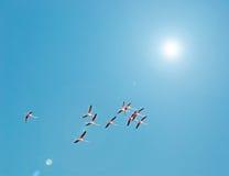 Flamingos and sun Royalty Free Stock Photo