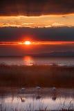 Flamingos at sunset Stock Images