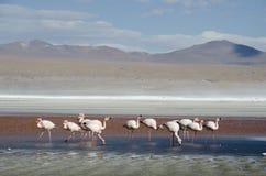 Flamingos time Stock Photos