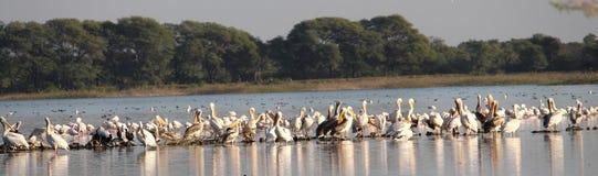 Flamingos town royalty free stock photography