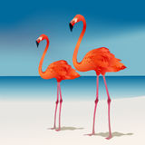 flamingos två Royaltyfri Fotografi