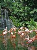 Flamingos u. Wasserfall Stockfoto