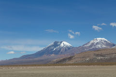 Flamingos and volcanos in Sajama National Park. Photograph of the highest mountain in Bolivia Mount Sajama Stock Image