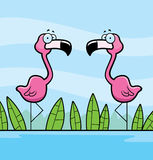 Flamingos Water Royalty Free Stock Images
