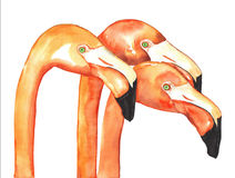 Flamingos Watercolor Royalty Free Stock Photo