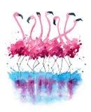 Flamingos watercolor painting stock illustration