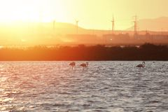 Flamingos and wind turbines silhouette at sunset - clean energy concept.  Stock Photo