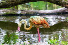 Flamingos. In the zoo of Kaliningrad Royalty Free Stock Image