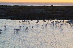 Flamingosolnedgång Arkivbild