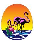 flamingossolnedgångvektor arkivfoton