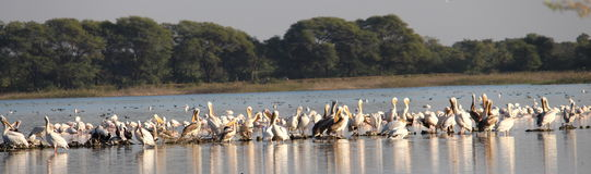 Flamingostadt lizenzfreie stockfotografie