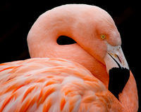 flamingostil royaltyfria bilder