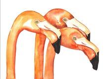 Flamingovattenfärg stock illustrationer