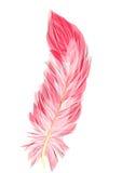 Flamingoveer Stock Afbeeldingen