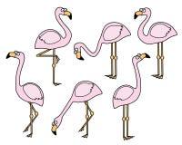 Flamingovektoruppsättning i en hand dragen tecknad filmstil Arkivbild