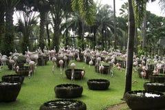 Flamingovogel im Garten Stockfoto